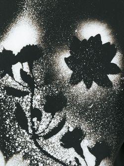 Толстовка С Цветочным Принтом Christopher Kane                                                                                                              черный цвет