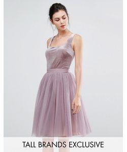 Little Mistress Tall | Короткое Приталенное Платье С Бархатным Лифом И Тюлевой Юбкой Little Mistress
