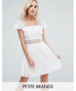 Miss Selfridge Petite | Кружевное Короткое Приталенное Платье