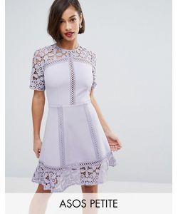 ASOS PETITE | Платье Мини С Кружевной Вставкой Premium