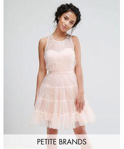 Little Mistress Petite | Тюлевое Ярусное Платье Мини Для Выпускного