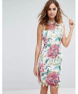 Paper Dolls | High Neck Premium Lace Midi Dress In Overscale