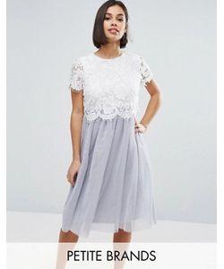 Boohoo Petite | Короткое Приталенное Платье С Кружевным Топом И Юбкой Из Тюля Boohoo