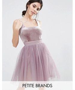 Little Mistress Petite | Короткое Приталенное Платье С Юбкой Из Тюля