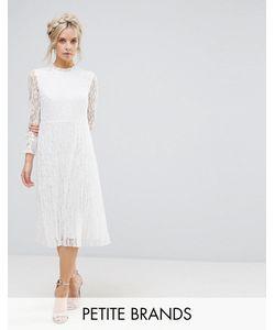 Little Mistress Petite | Кружевное Приталенное Платье С Высоким Воротом