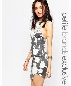 Tiger Mist Petite | Облегающее Кружевное Платье С Лямкой Через Шею Freed