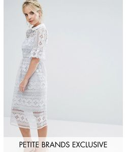 True Decadence Petite | Кружевное Приталенное Платье С Расклешенными Рукавами