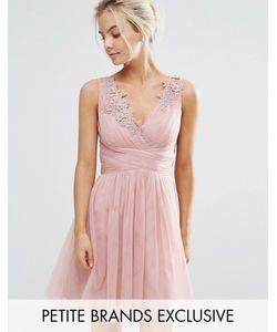 Little Mistress Petite | Платье Мини Из Тюля Для Выпускного С Кружевной Аппликацией Little Mistress