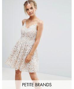 Little Mistress Petite | Короткое Приталенное Платье Для Выпускного Из Премиум-Кружева
