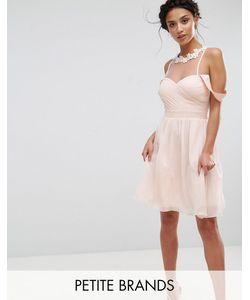 Little Mistress Petite | Платье Мини С Открытыми Плечами Плиссированным Лифом И Кружевной Аппликацией Little