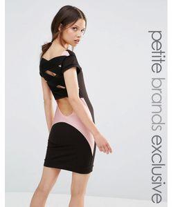 Quontum Petite | Облегающее Платье С Сетчатыми Вставками