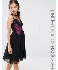 Little Mistress Petite | Приталенное Платье С Контрастной Цветочной Отделкой Черный