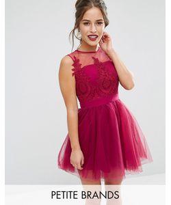 Chi Chi Petite   Платье Мини Для Выпускного С Пышной Юбкой И Вышивкой Chi Chi