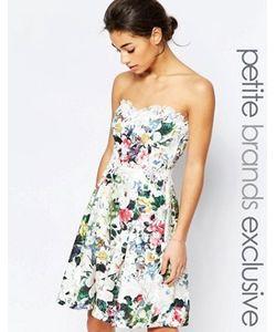 Paper Dolls Petite | Платье Для Выпускного С Кружевной Отделкой И Принтом