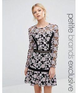 True Decadence Petite | Кружевное Приталенное Платье