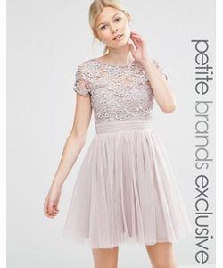 Little Mistress Petite | Платье Мини С Короткими Рукавами Тюлевой Юбкой И Кружевным Лифом Little
