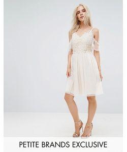 Little Mistress Petite | Короткое Приталенное Платье С Открытыми Плечами И Кружевом