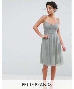 Little Mistress Petite | Приталенное Платье Для Выпускного Из Тюля
