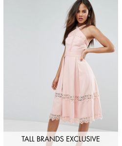 True Decadence Tall | Приталенное Платье С Высоким Воротом И Кружевными Вставками