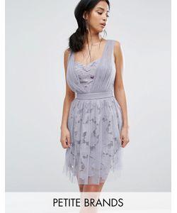 Little Mistress Petite | Платье Мини С Цветочной И Тюлевой Отделкой