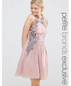 Little Mistress Petite | Короткое Приталенное Платье С Кружевным Принтом