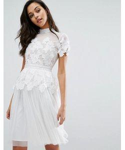 Miss Selfridge | Платье С Кружевной И Тюлевой Отделкой