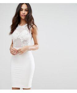 Club L | Платье Миди С Сетчатой Отделкой И Кружевом