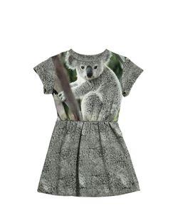 Popupshop   Koala Printed Cotton Dress