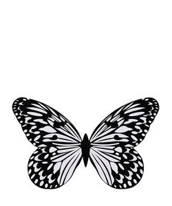 VISIONNAIRE | Argante Butterfly Silk Wool Rug