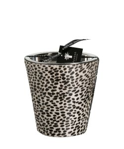 BAOBAB COLLECTION | Leopard Printed Ponyskin Max 24 Candle
