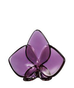 Baccarat | Орхидея Малиновая Orchid