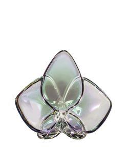 Baccarat | Орхидея Радужная Orchid