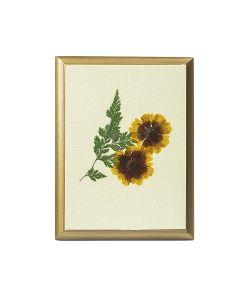 DEEPOT | Картина Сувенир Гербарий Солнечный Цветок