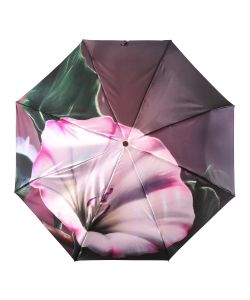 Trust   Зонты