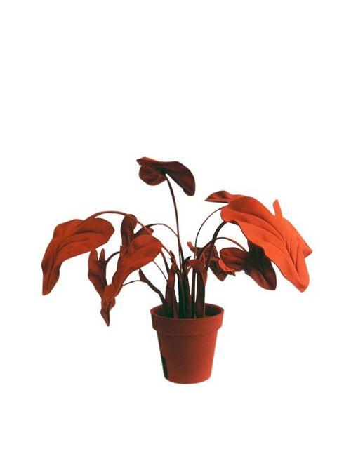 WANDSCHAPPEN | Красный Alocasia S Decorative Wool Felt Plant