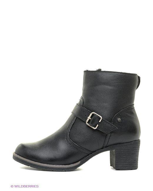 Ботинки SHOIBERG                                                                                                              чёрный цвет