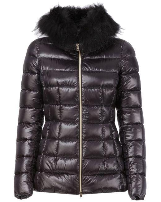 Herno | Женское Чёрный Fox Fur Collar Padded Jacket